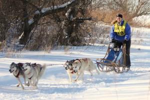 Massena Sled Dog Races, photo provided by Kathy Murarik